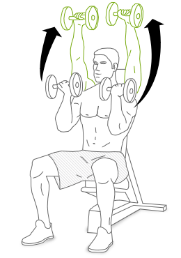 The Arnold Press Exercise