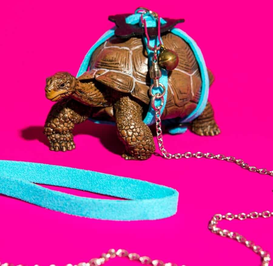 Walking a turtle