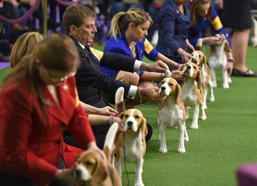 The Westminster Kennel Club Dog Show 2019