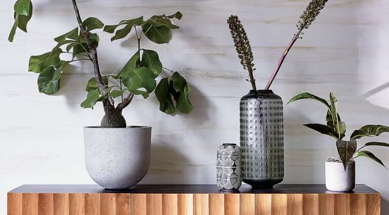 A Big Plant Is the Statement Piece You Didn't Know You Needed