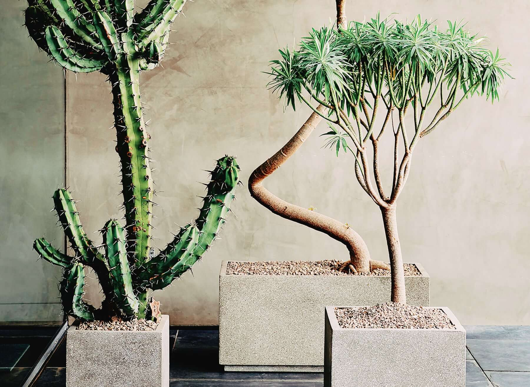 How to choose a statement house plant and how to care for it